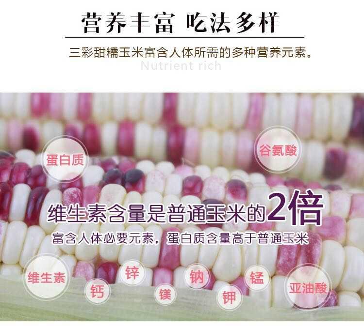 闪电发货)现摘新鲜糯甜玉米3斤糯玉米